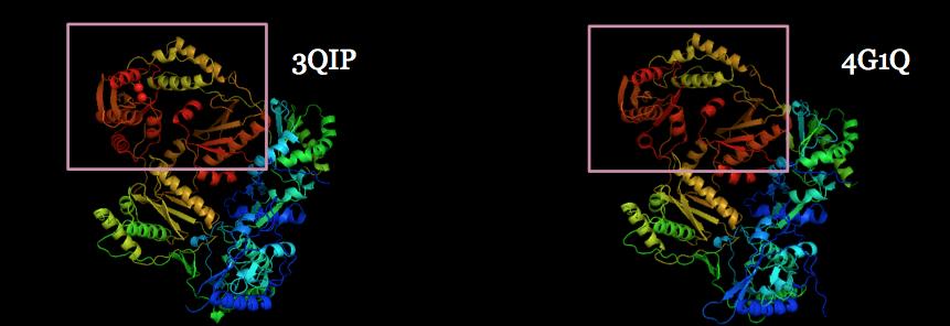 protéines Ebola